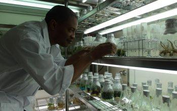 植物組織培養研究室